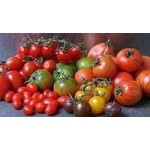 Способы выращивания томатов