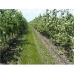 Обработка почвы под плодовые деревья